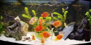 Akvariumet som det ser ut nu.